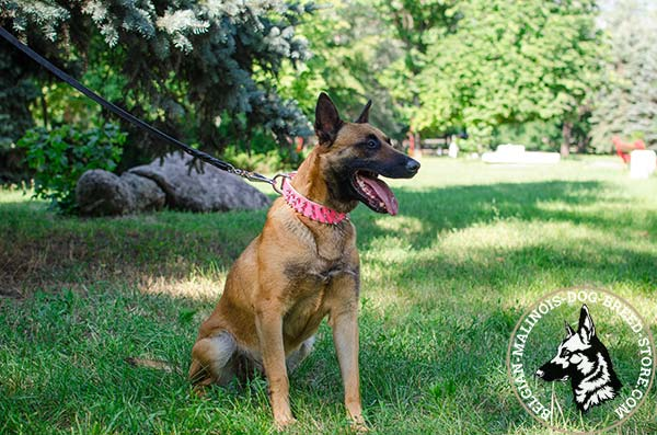 Belgian Malinois pink leather collar of high quality with handset adornment for daily activity