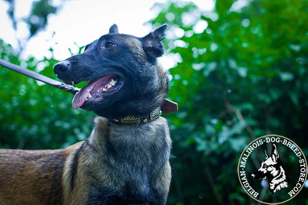 Belgian Malinois brown leather muzzle of genuine materials with nickel plated hardware for any activity