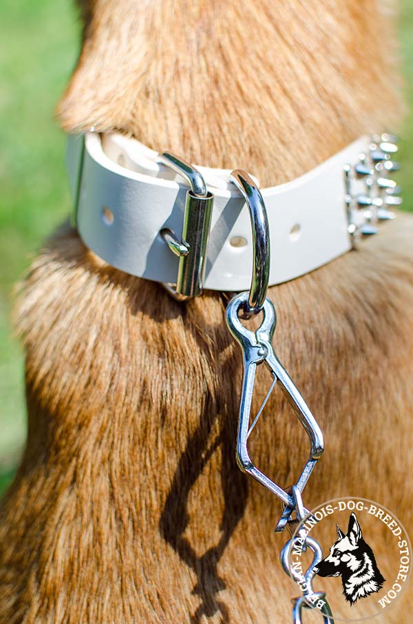 Belgian Malinois white leather collar of high quality with handset adornment for daily activity