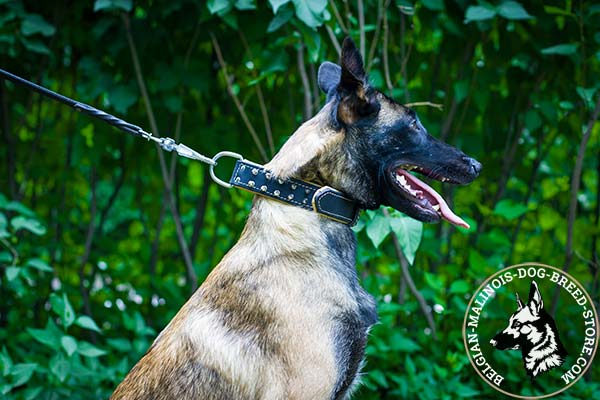 Belgian Malinois black leather collar Nappa padded with handset decoration for daily activity