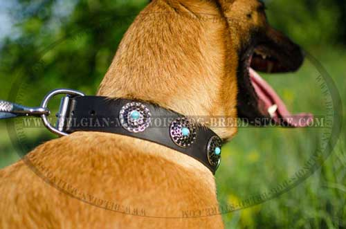 Belgian Malinois Leather Collar with Circles