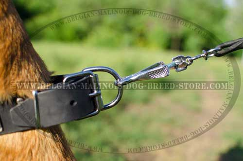 Belgian Malinois Leather Collar with Nickel Hardware