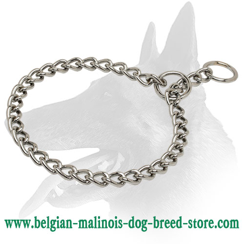 Belgian Malinois chrome plated collar