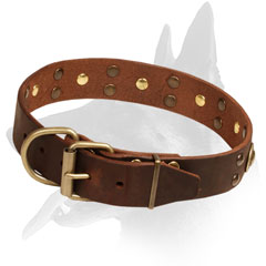Leather Collar Belgian Malinois with Brass Hardware