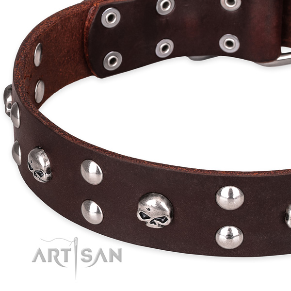 Daily leather dog collar with extraordinary studs