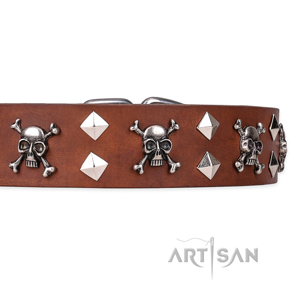 Casual leather dog collar with sensational embellishments