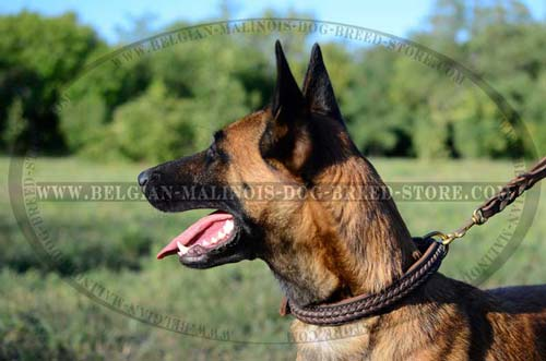 Superb Malinois Leather Collar