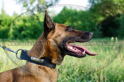 Practical Belgian Malinois Leather Collar