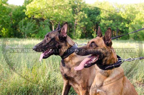 Pet Safe Malinois Leather Collar
