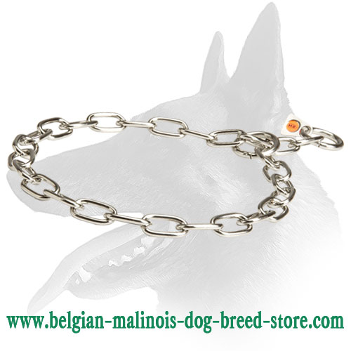 Steel Choke Collar for Belgian Malinois