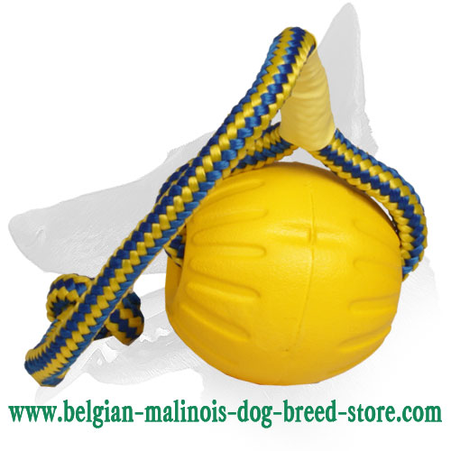 Solid Belgian Malinois Ball for Training and Playing