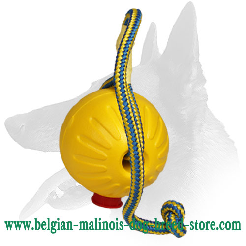 Reliable Foam Dog Ball for Belgian Malinois