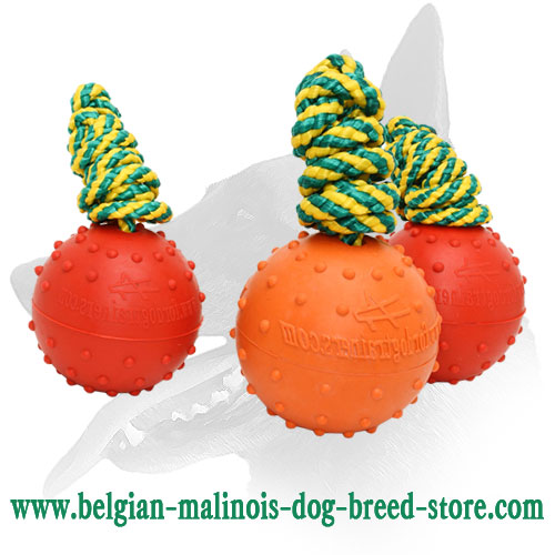 Safe for Training Belgian Malinois Toy