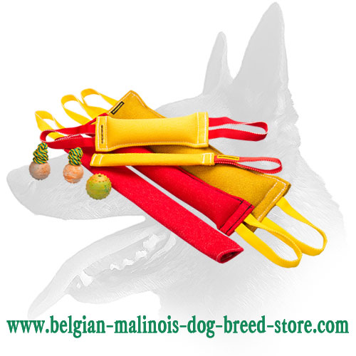 8-Tools Belgian Malinois Training Set
