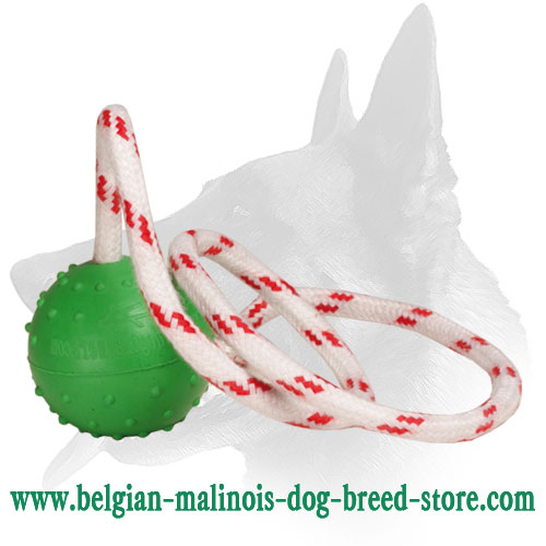 Bright Water Floating Toy for Belgian Malinois