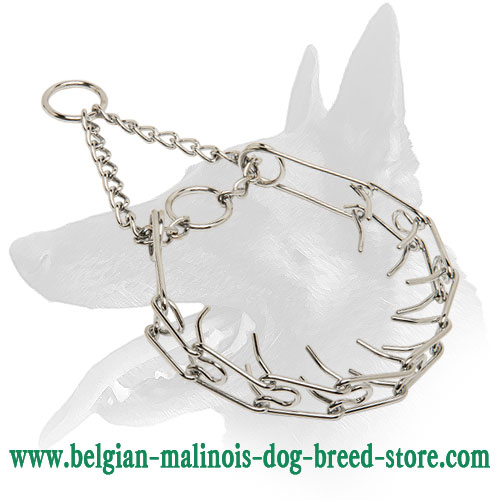 Chrome Plated Dog Collar for Belgian Malinois