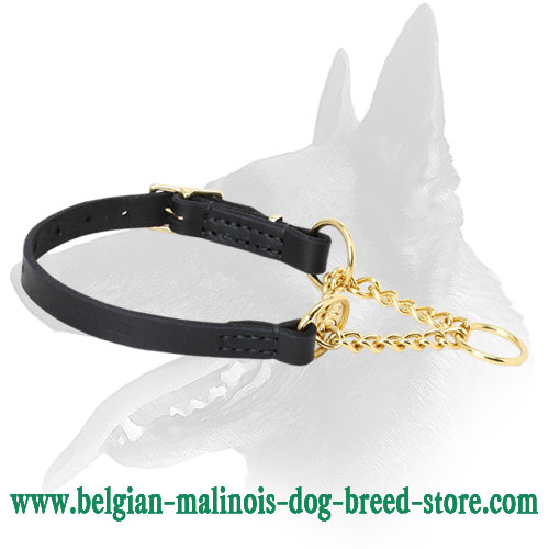 Belgian Malinois Collar Made of Leather and Brass