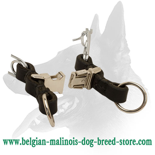 Belgian Malinois Collar with Quick Release Buckle