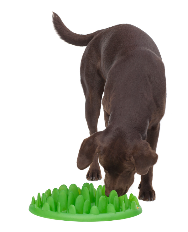 Non-Toxic Green Grass Shape Plate for Belgian Malinois