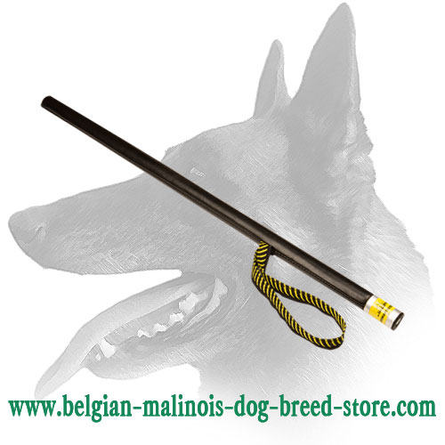 Belgian Malinois Stick for Schutzhund Dog Training