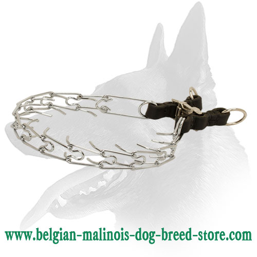 Strong Pinch Dog Collar for Belgian Malinois