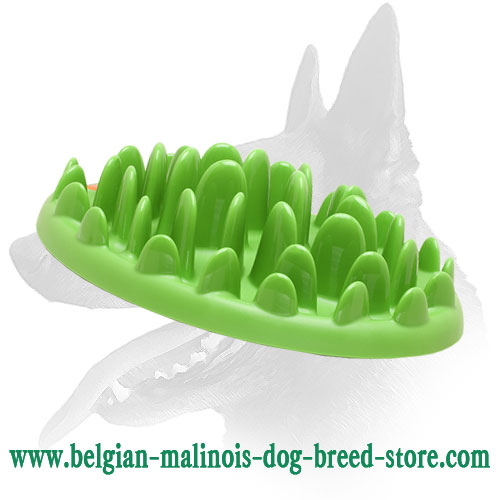 Safe Dog Feeder for Belgian Malinois