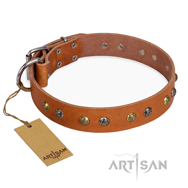 Daily use designer dog collar with durable hardware