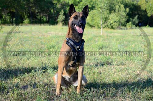 Comfortable Belgian Malinois Dog Leather Harness