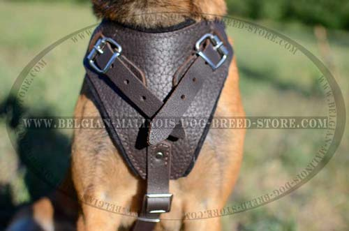 Safe Leather Harness