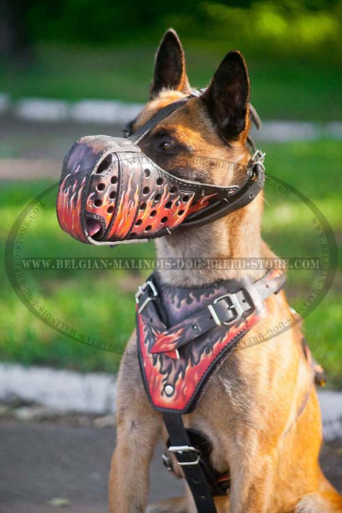 Malinois wearing Flames Painted Harness