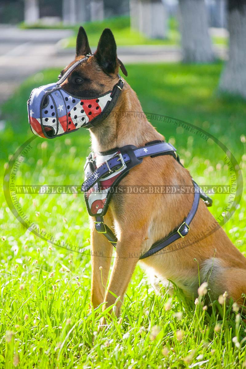 Get Belgian Malinois Leather Harness