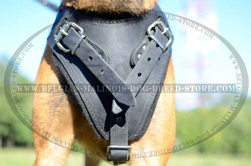 Adjustable Belgian Malinois leather harness