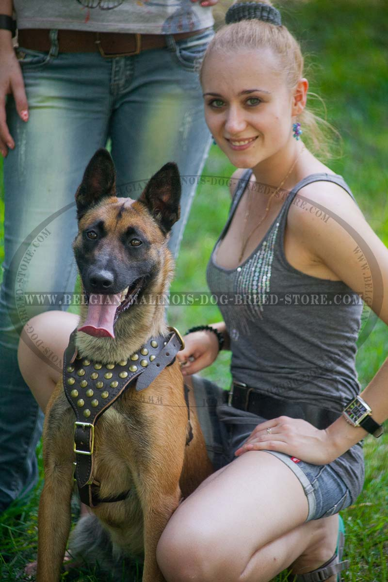 Belgian Malinois Leather Harness together with Capital Building Diagram in addition Dish Playmaker Dual 2 Receiver Bundle With Wally White besides Navy Base Locations Overseas also Passive Optical  work. on military wiring diagram