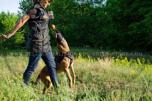 Belgian Malinois Nylon Harness for Everyday Use