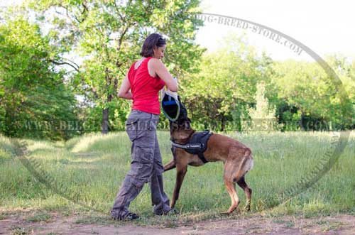Walking and Training Belgian Malinois Nylon Harness