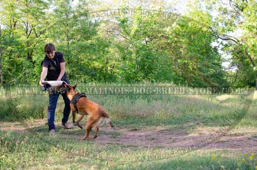 Obedience Training Belgian Malinois Nylon Harness