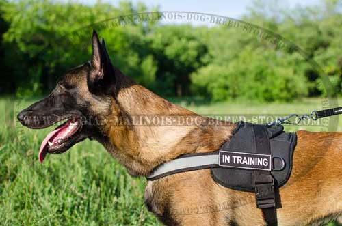 Belgian Malinois Nylon Harness with Reflective Strap