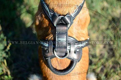 Comfortable handle on Malinois leather harness