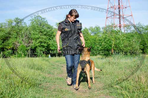 Training Malinois Nylon Harness and Ultimate Training Vest