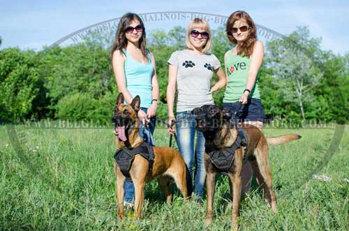 Training Malinois Nylon Harness