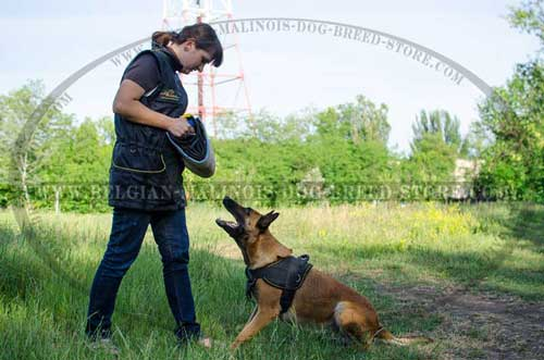 Malinois Nylon Harness with Bite Developer and Trainign Vest