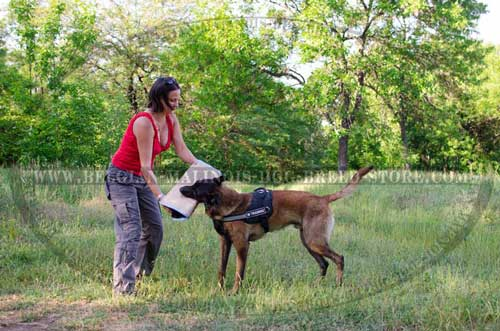 Belgian Malinois Nylon Harness for Everyday Training