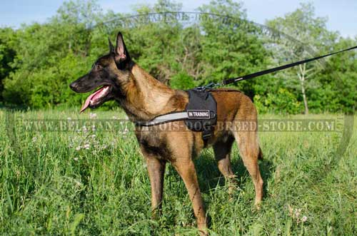 Belgian Malinois Nylon Harness