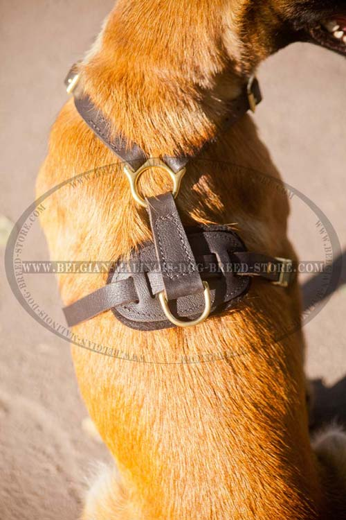 Exclusive Leather Harness