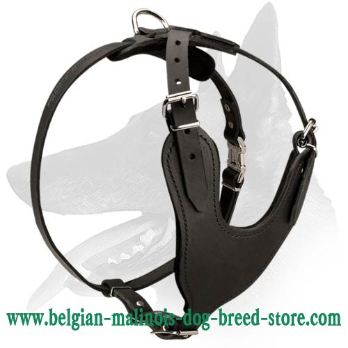 Heavy Duty Leather Harness for Belgian Malinois