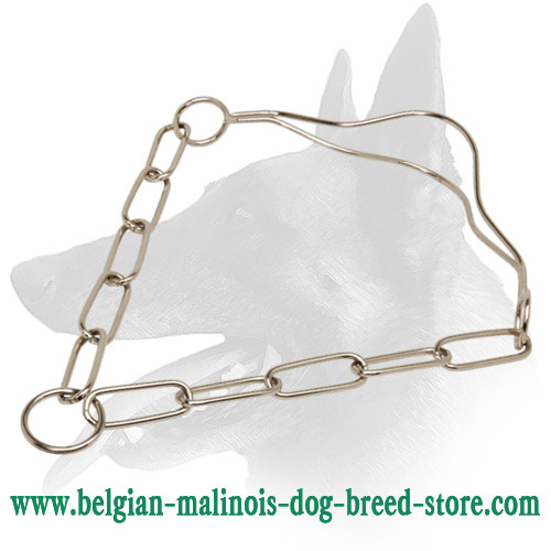 Belgian Malinois Quality Chrome Plated Show Dog Collar