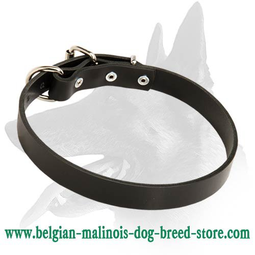 Sound Leather Collar for Belgian Malinois