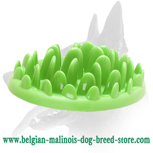 """Green Lawn"" Belgian Malinois Feeder for Healthy Eating"