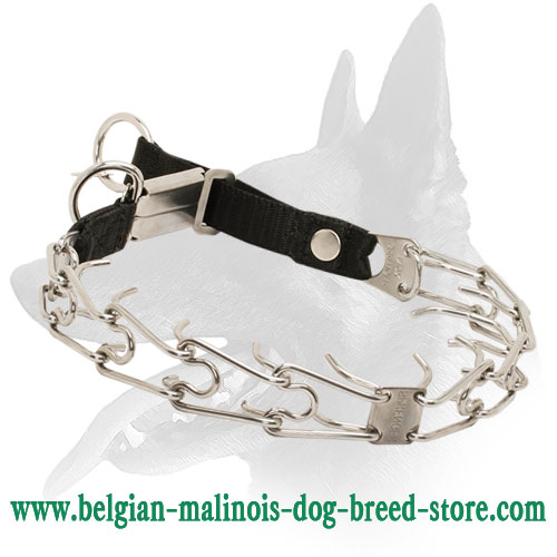Belgian Malinois Stylish Stainless Steel Pinch Collar with Click Lock Buckle and Nylon Loop