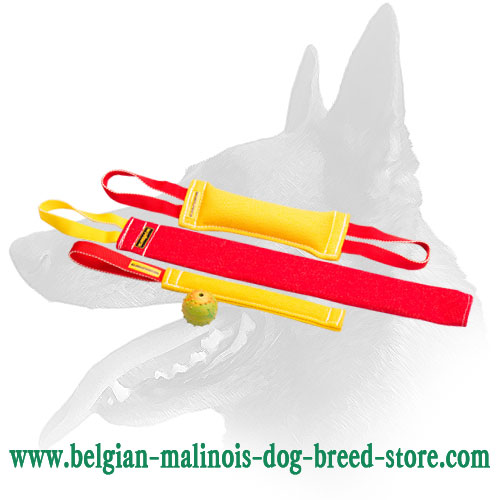 Buy Now Belgian Malinois Puppy Training Set and Get Great Training Toy ( value $5.9) - Set (BiteTug+pocket toy+bite rag)